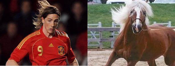 Fernando Torres-koń