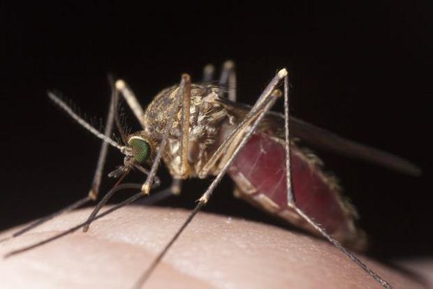 Malaria (zimnica)