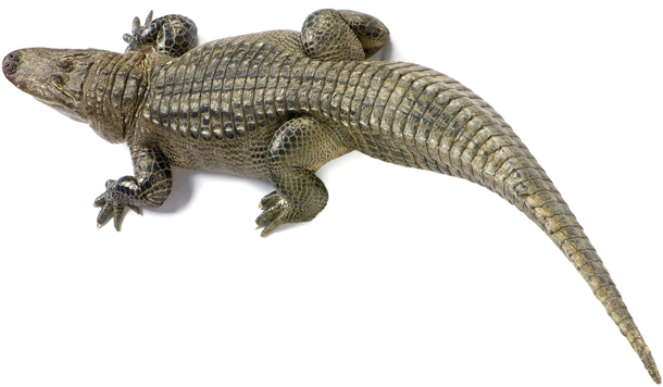 Floryda, USA, aligator