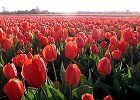 Holandia otworzy�a dzi� rynek pracy dla Polak�w