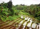 Podr�e Marze�: Bali