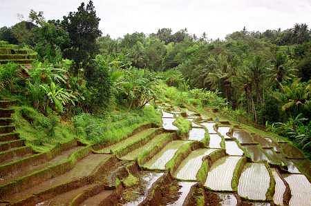 Podróże Marzeń: Bali