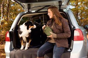 Przewóz zwierząt | Jak pies z kierowcą