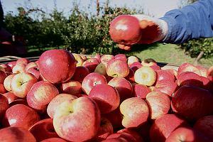 Brakuje chętnych szkół na jabłka i marchewki