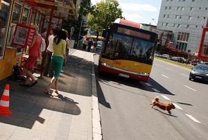 http://bi.gazeta.pl/im/4/8117/z8117314M,MPK-Rzeszow.jpg