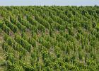 Francja: s�d skaza� w�a�ciciela winnicy za nielegalne zatrudnianie Polak�w