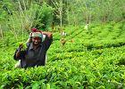 Sri Lanka. Królestwo słoni, herbaty i plaż