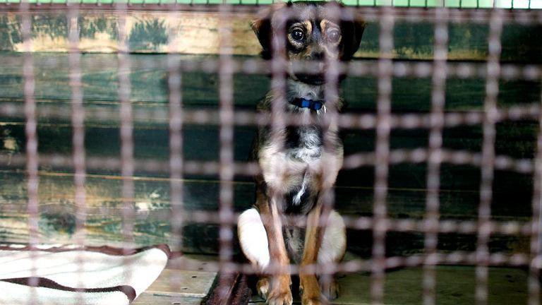 Samotny pies w schronisku dla zwierząt w Katowicach, 6.03.2011 r.