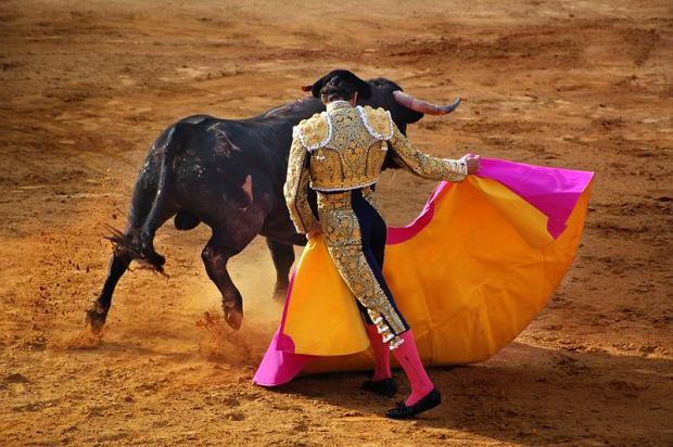 Hiszpania przeg�osowa�a ustaw� o ochronie walk byk�w