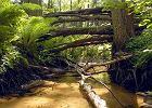 Rezerwat Kulik�wka - minid�ungla w pigu�ce