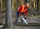Ochrona zwierząt nie zatrzyma drwali. Nowa ustawa umożliwi wielką wycinkę drzew