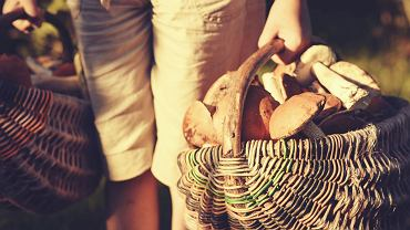 'Nie zbieraj ani za starych, ani za młodych. Grzyby wykręcaj, zamiast wyrywać.' Jak, gdzie i do czego zbierać grzyby? Pytamy eksperta