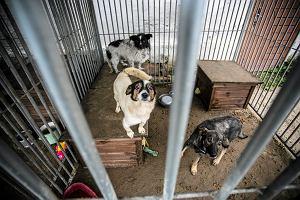 Lek na bezdomność zwierząt