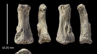 Kości palca liczące aż 85 tys. lat, odkryte na pustyni w Arabii Saudyjskiej