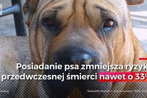 Pies może uczynić życie nie tylko piękniejszym, ale i dłuższym