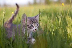 11 mało znanych faktów o kotach. Dziś ich dzień