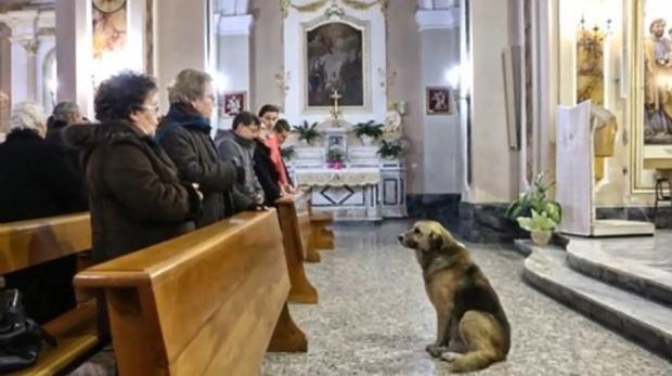 Pies czeka na panią w kościele