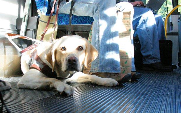Amtrak Dog Friendly