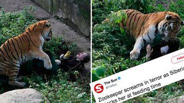 Tygrys zaatakował opiekunkę w zoo