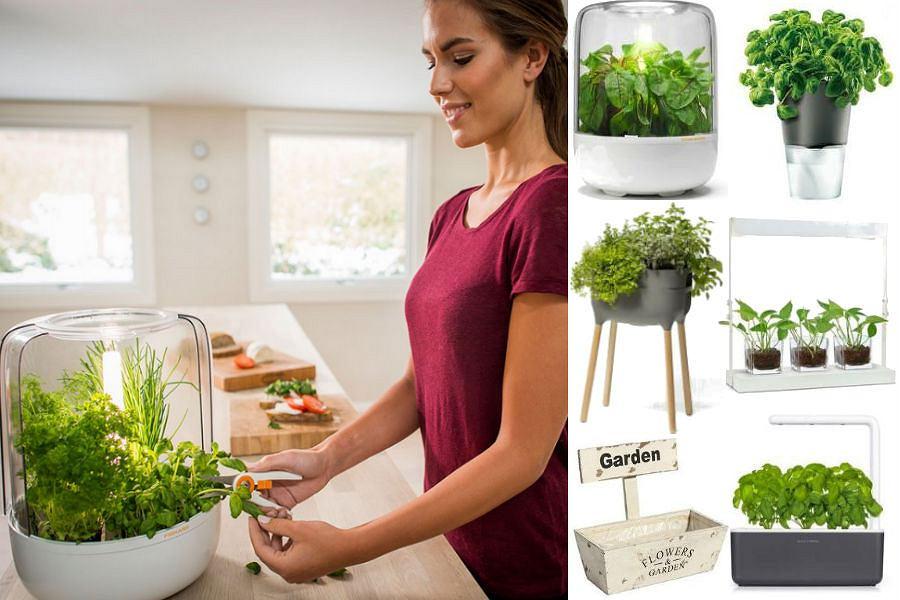 Zioła w kuchni muszą mieć idealne warunki do zdrowego rozwoju
