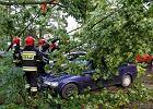 Drzewa powalone przez nawałnicę na os. Dambonia w Opolu