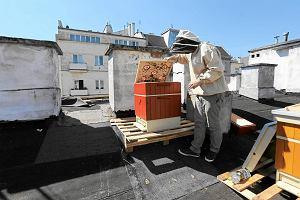 Pszczelarze wychodz� z ukrycia. Ule mog� sta� obok blok�w