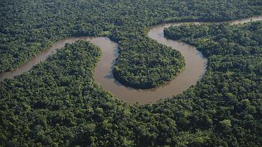 Według najnowszych rachunków w Amazonii mieszka 6 tys. 727 gatunków drzew. Stanowią niecałą połowę z przeszło 14 tys. gatunków amazońskich roślin.