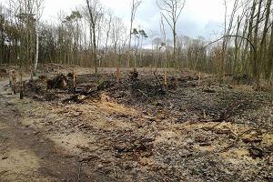 Wycięli drzewa nad Rusałką. Leśnicy obiecują: Posadzimy tu nowy las