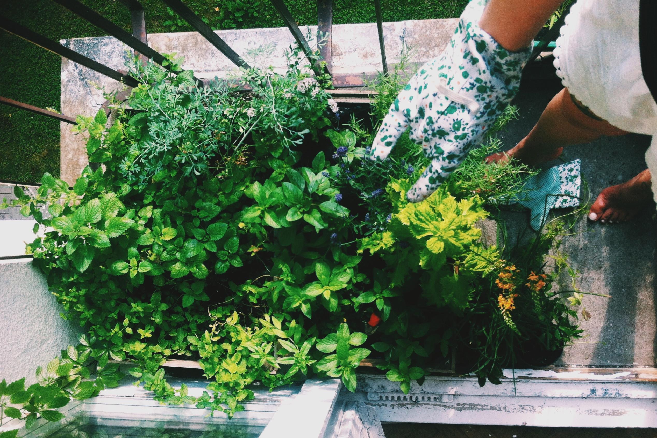 Ogródek na balkonie Marysi (fot. Maria Przybyszewska)