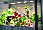 Na czym polega uprawa hydroponiczna?