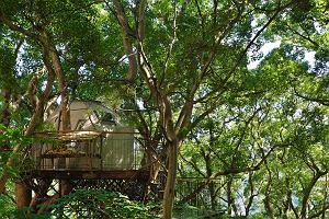 Domek na drzewie niczym gniazdo