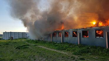 Pożar chlewni w Wychowańcu (woj. wielkopolskie)