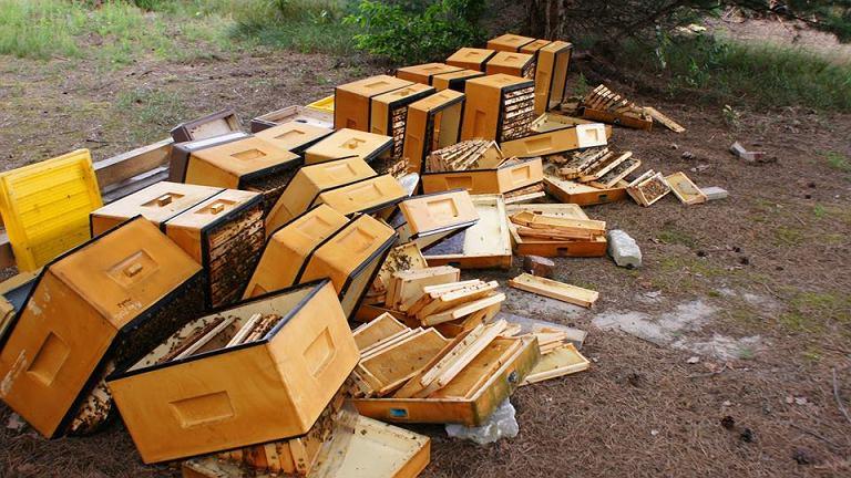 Zniszczone ule w gminie Harasiuki