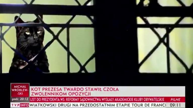 TVP Info o kocie prezesa