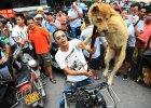 Obro�cy praw zwierz�t wtargn�li na festiwal psiego mi�sa