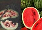Ten siedemnastowieczny obraz pokazuje, jak ludzka ingerencja zmienia owoce na przestrzeni wiek�w