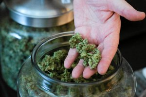 Australia zalegalizuje medyczną marihuanę? Projekt ustawy trafił do parlamentu
