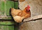 Jajko czy kura? Nie zawsze wa�ne s� odpowiedzi