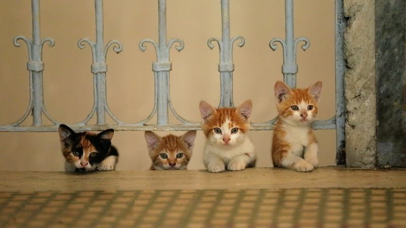 Kadr z filmu 'Kedi. Sekretne życie kotów' / materiały prasowe