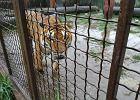 Powódź w hodowli pod Śremem. Woda zalewa zwierzęta, nikt nie chce pomóc. Dramatyczny apel dyrektorki zoo