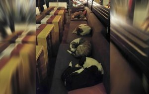 Kawiarnia na greckiej wyspie Lesbos stała się schronieniem dla bezdomnych psów. Każdej nocy można spotkać tam śpiące czworonogi.