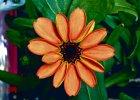 Ciekawostki naukowe. Kwiat w kosmosie, niezdrowy �nieg i tablet z brajlem dla niewidomych
