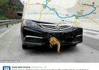 Pies uwi�ziony w zderzaku samochodu przejecha� prawie 400 kilometr�w
