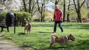 Nowe przepisy dla właścicieli psów
