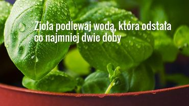 Jak hodować zioła?