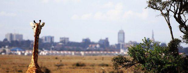 Afryka. Nairobi - Kenia w innym wydaniu