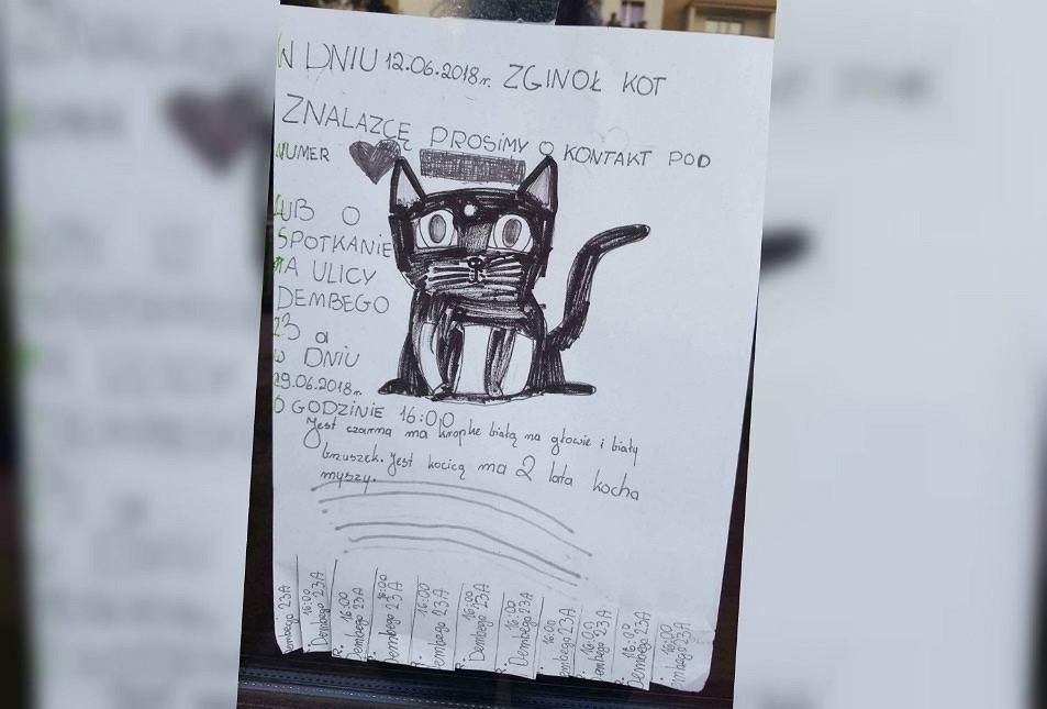 Ogłoszenie o kocie, którzy zaginął na Ursynowie
