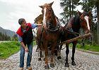 Trwaj� badania koni wo��cych turyst�w w Tatrach