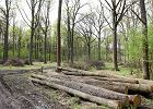 Trybuna�: Zasady kar za wycink� drzew s� niekonstytucyjne