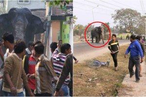 Dziki słoń zdemolował miasto w Indiach. Przez kilka godzin niszczył budynki i płoszył mieszkańców